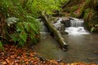 other,counties,fife,Woodland,Waterfall,Fife